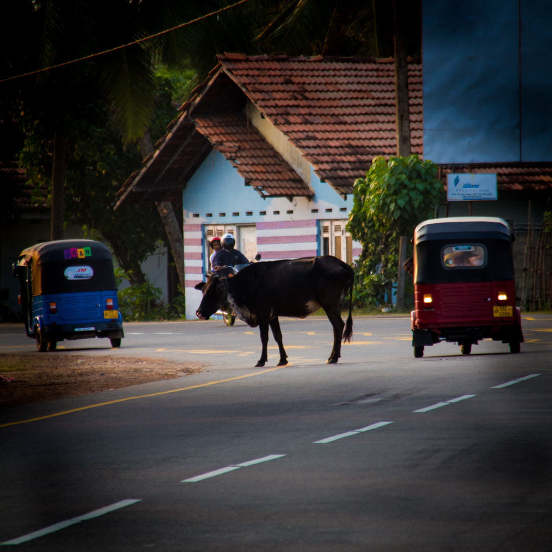 the-sidewalk-secrets-travel-blog-surf-sri-lanka-midigama-mirissa-surfing-sunset-2