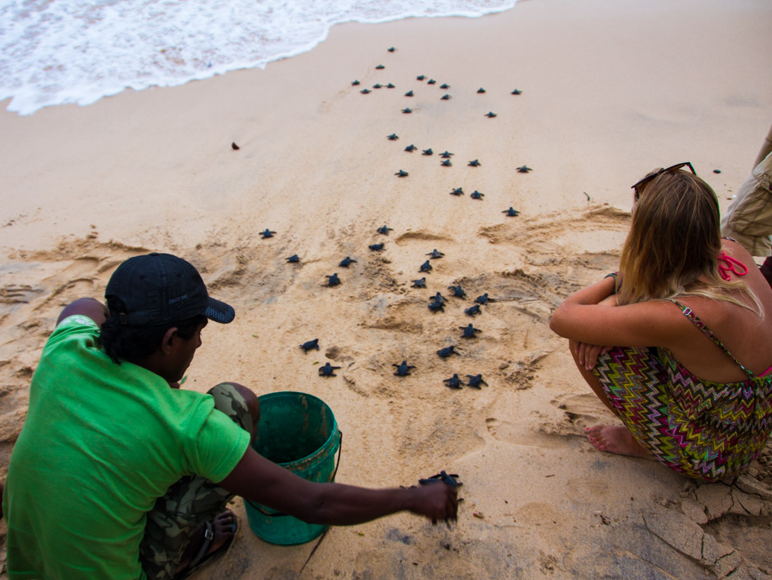 surf-bums-in-sri-lanka-living-the-dream-set-the-turtles-free-3